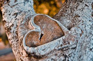 inima de copac